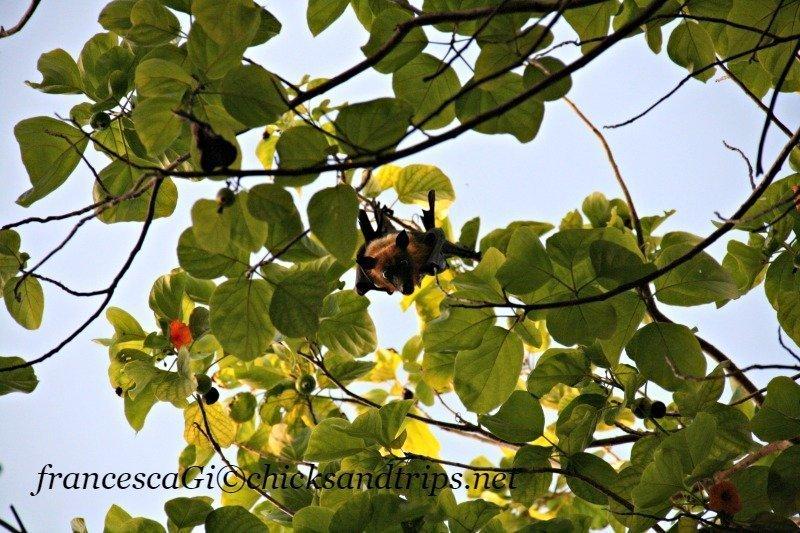 Il primo incontro con una rossetta maldiviana