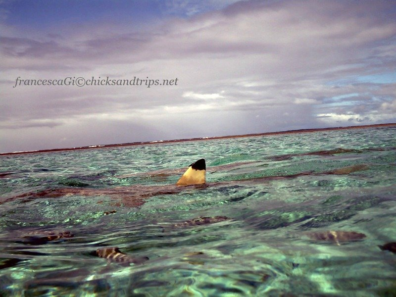 Black tip a Bora Bora