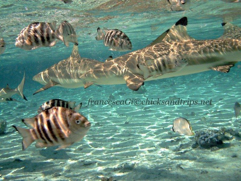 Un tuffo tra gli squali a Bora Bora