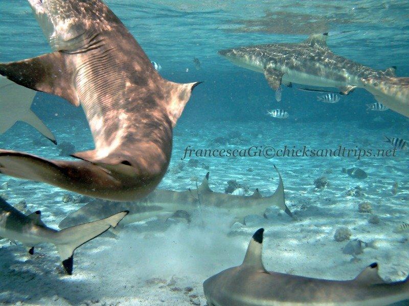 a Bora Bora con gli squali!