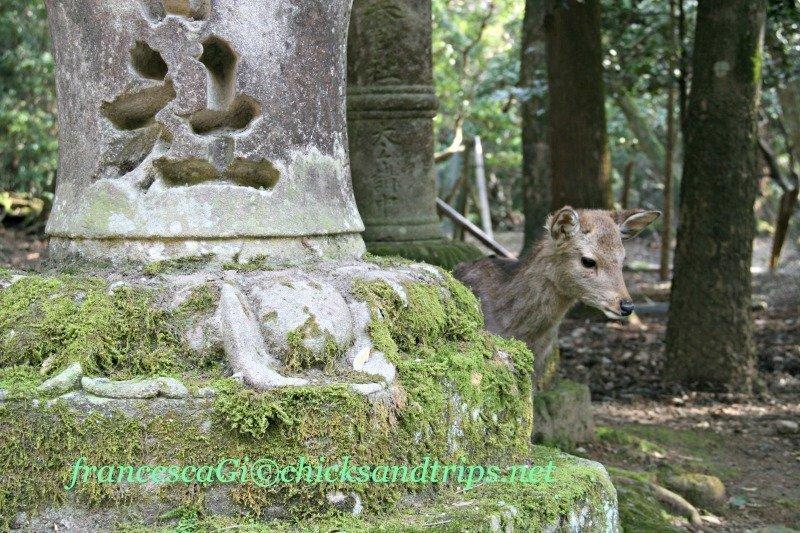 Nel Parco di Nara