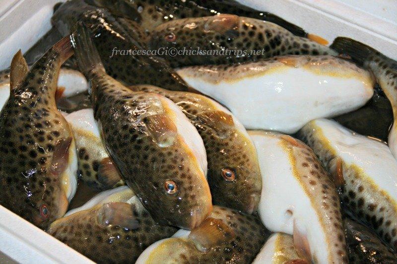 Fugu (Pesce palla)