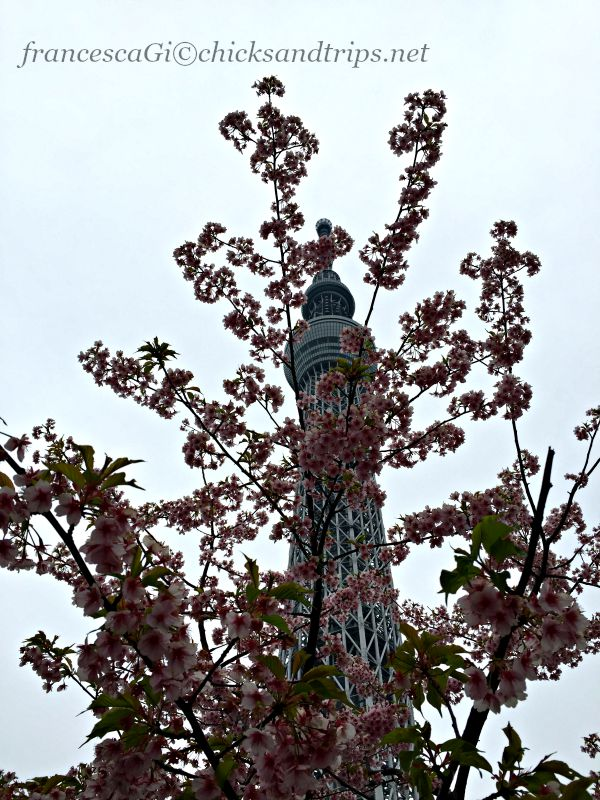 Sakura e Tokyo Sky Tree