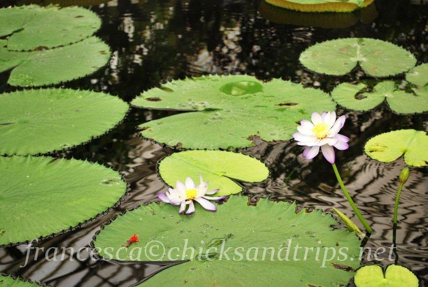Kew Gardens Londra