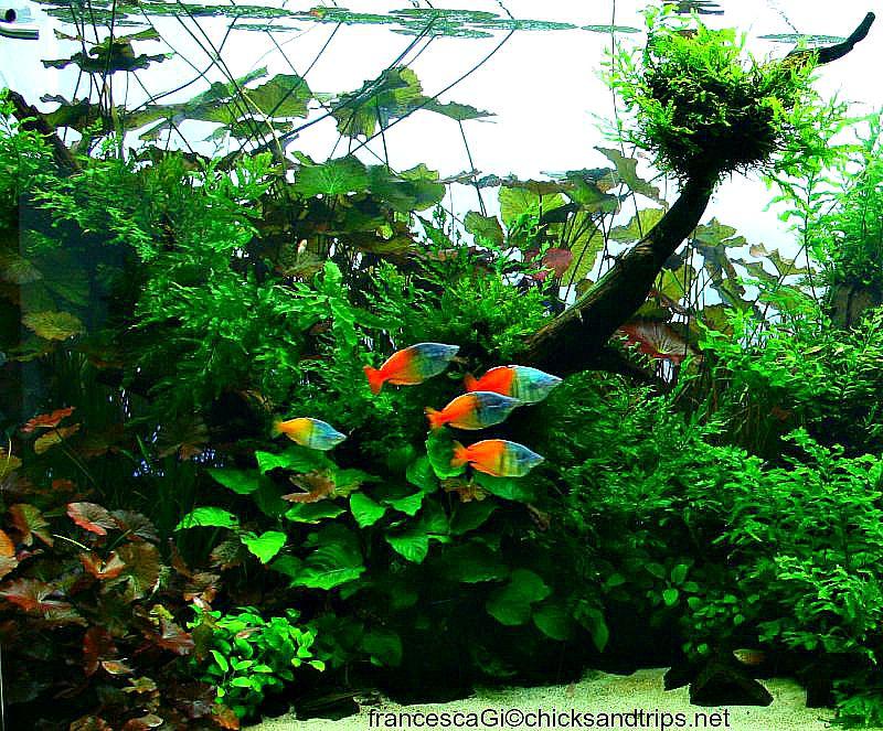 I meravigliosi Rainbow fish