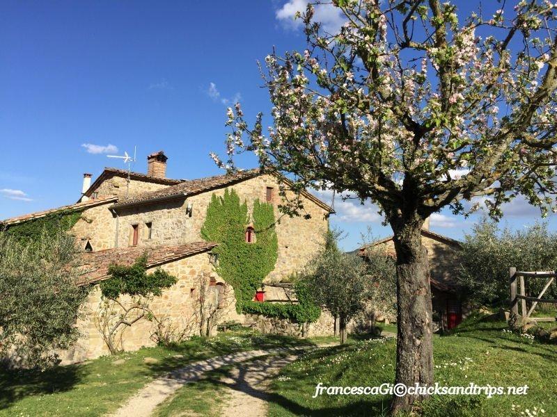 Agriturismo vegano in Umbria: Torre Morgana
