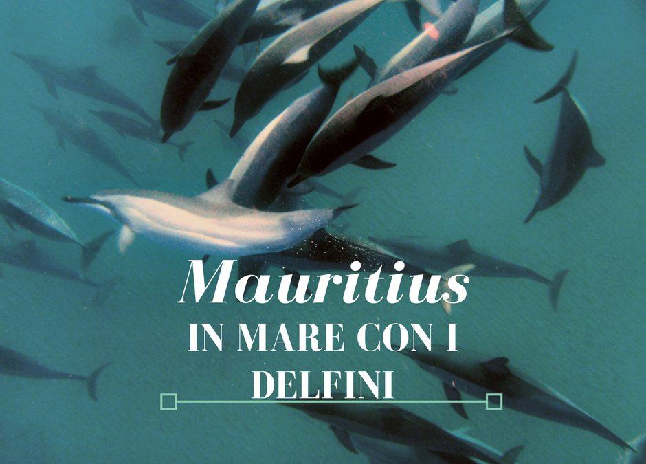 Mauritius: in mare con i delfini