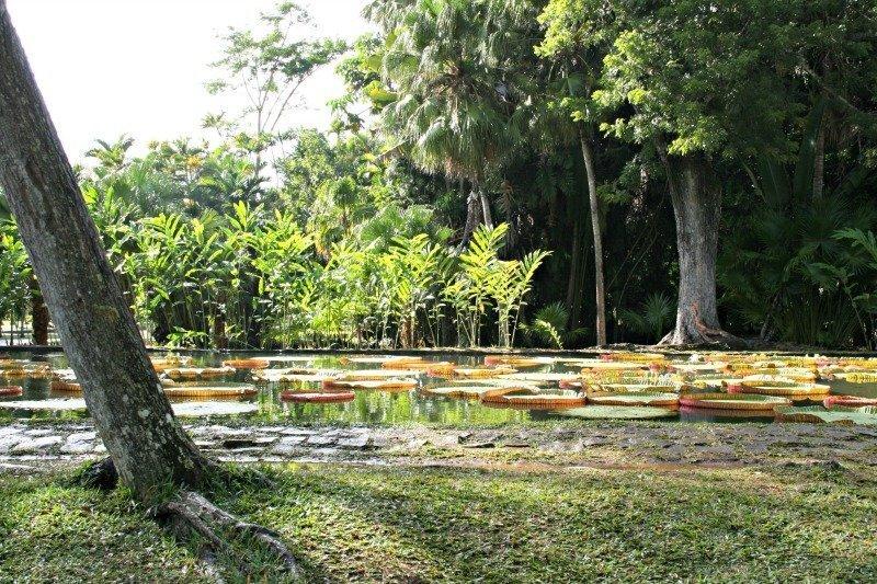 Nel verde di Mauritius: visita al Giardino Botanico di Pamplemousses