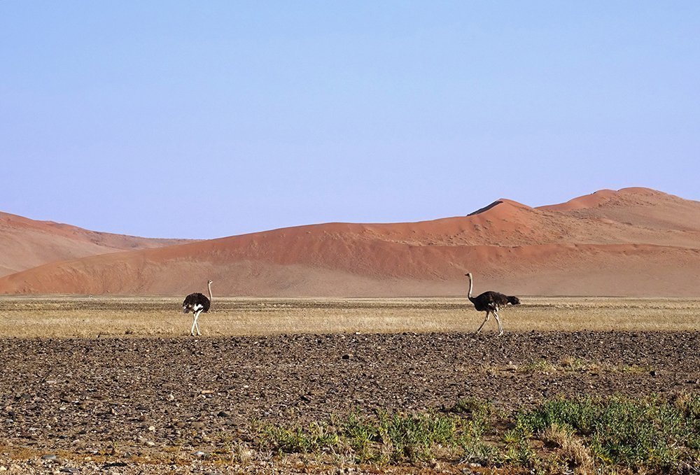 viaggio di nozze in Namibia