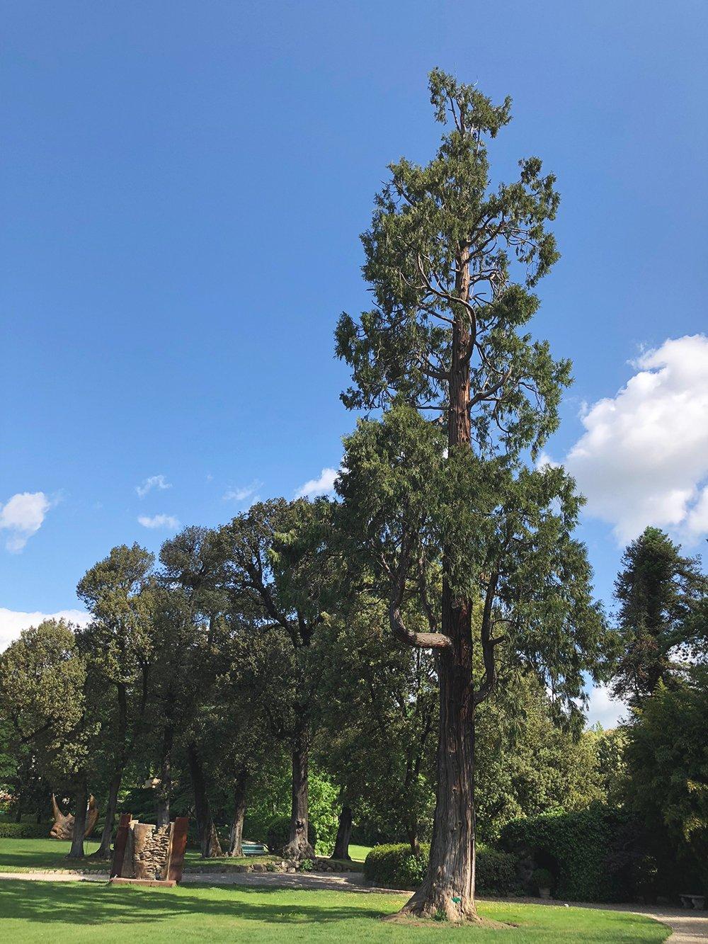Giardini segreti di firenze giardino della gherardesca sequoia gigante