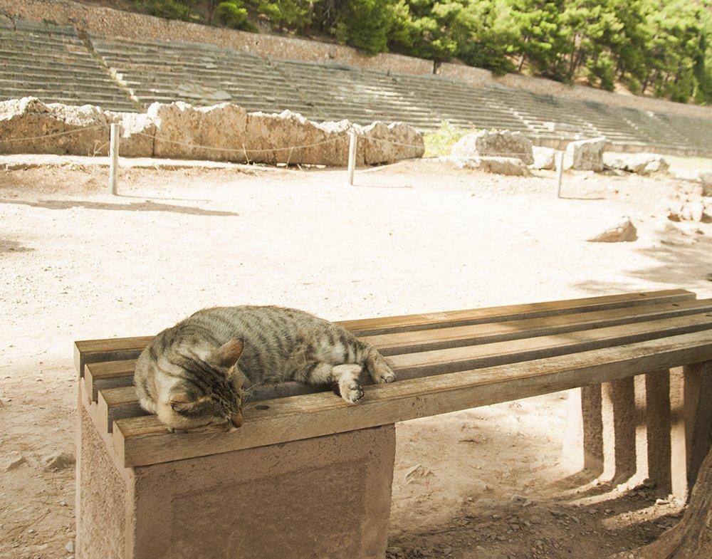 grecia gatto delfi