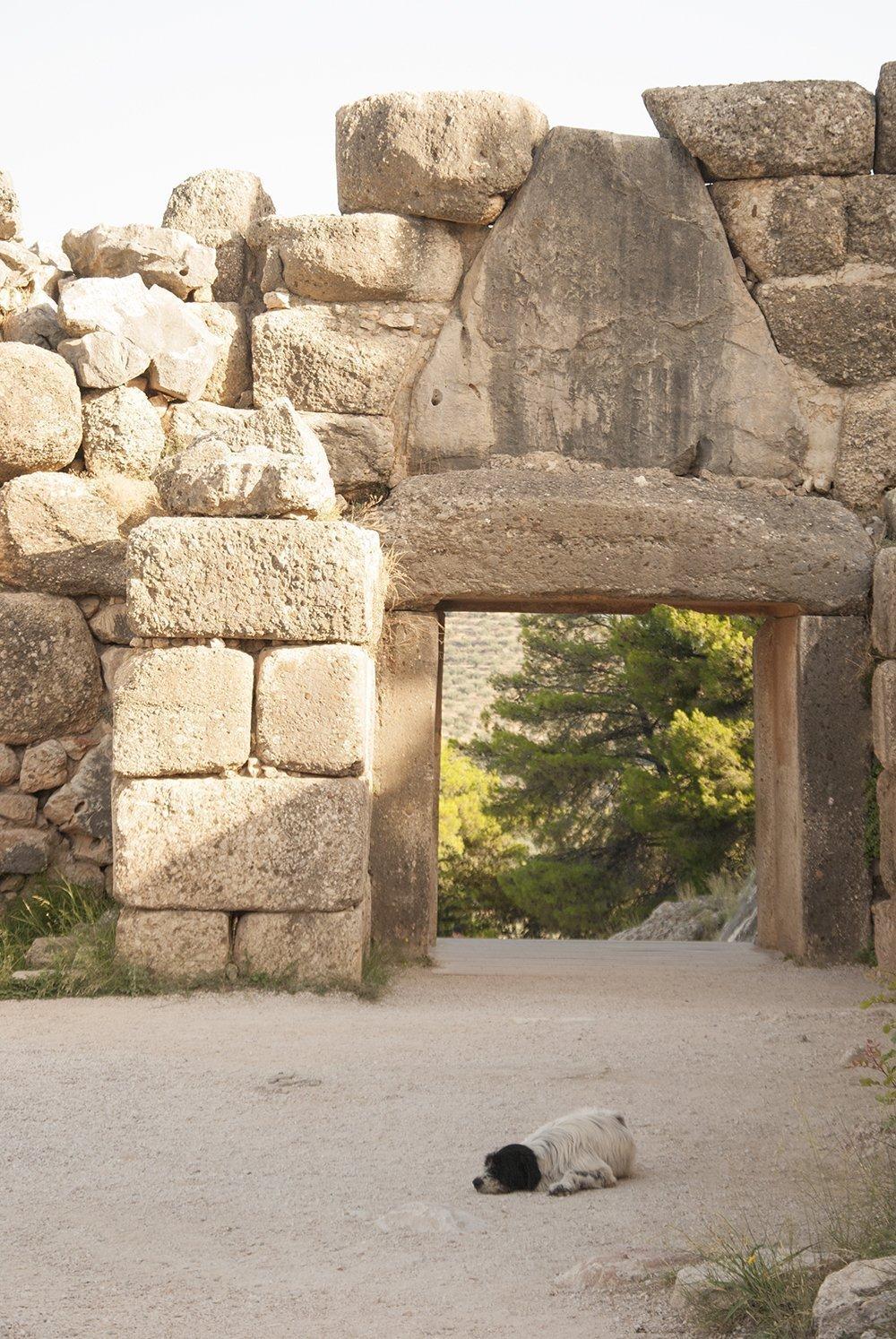 micene randagi mura ciclopiche porta dei leoni