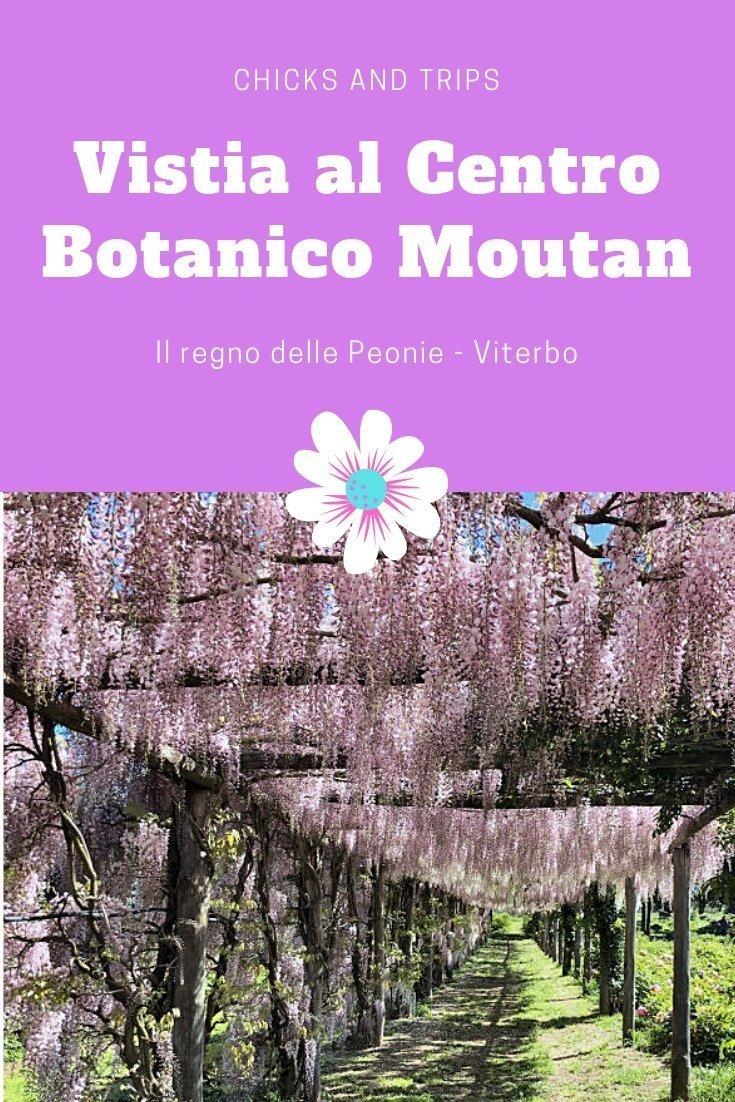 Centro Botanico Moutan Viterbo Peonie Lillà