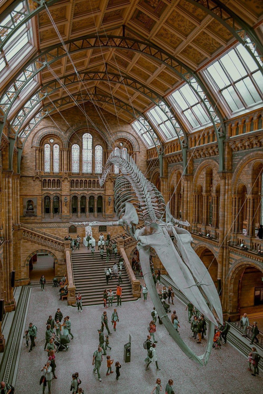 natural history museum londra gratis cosa fare