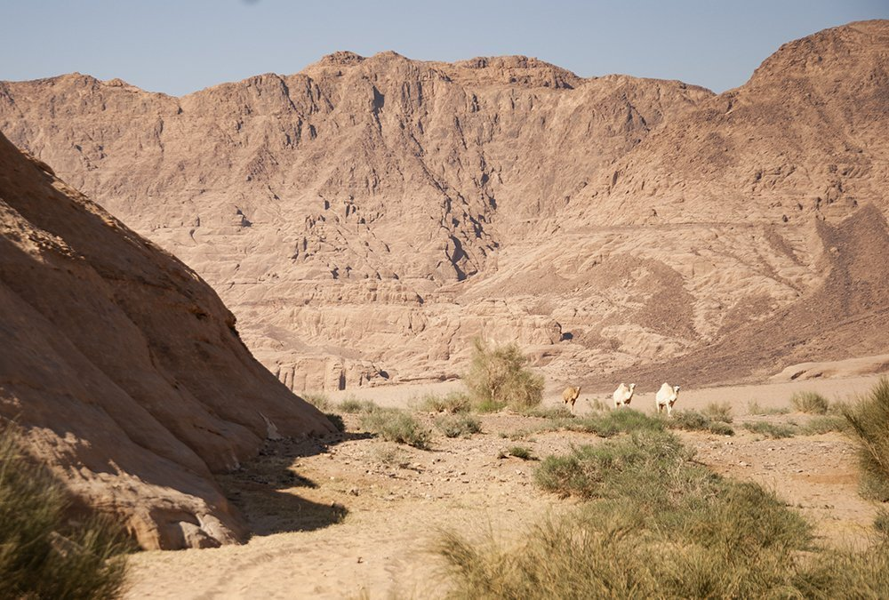 giordania on the road