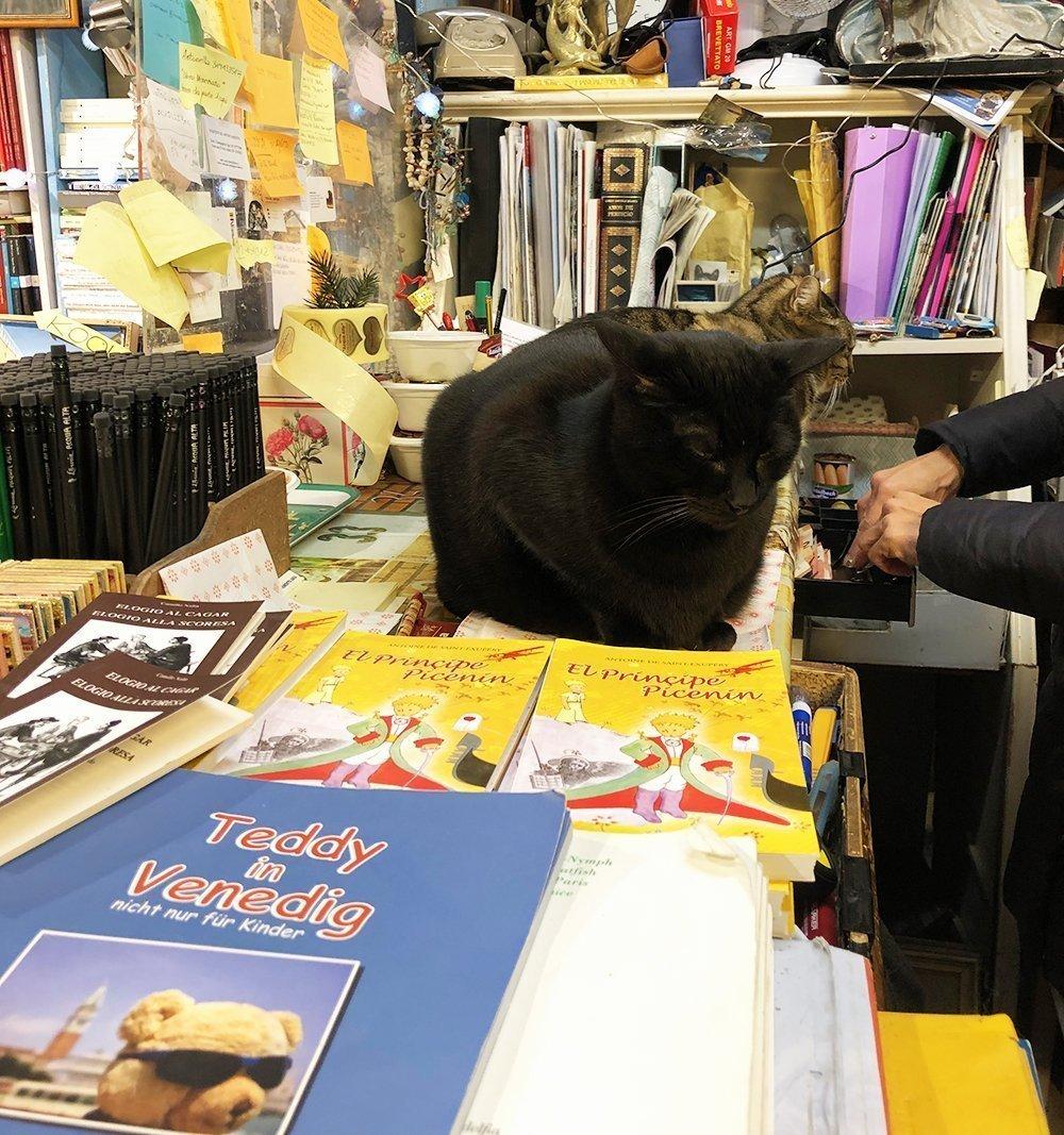 gatti libreria acqua alta venezia