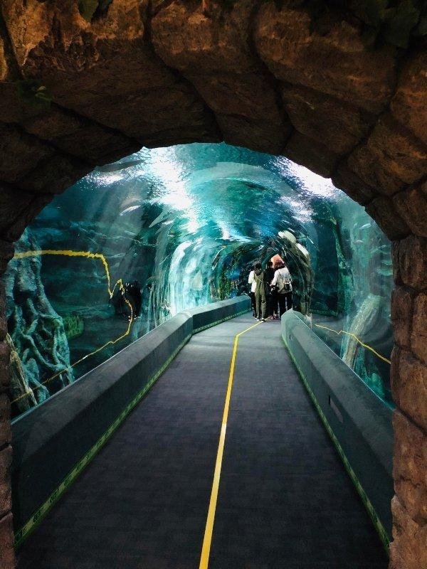 lotte aquarium world