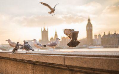 Come risparmiare in un viaggio a Londra